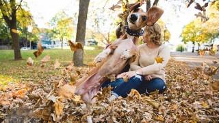 Dog photobombs couples' engagement photos