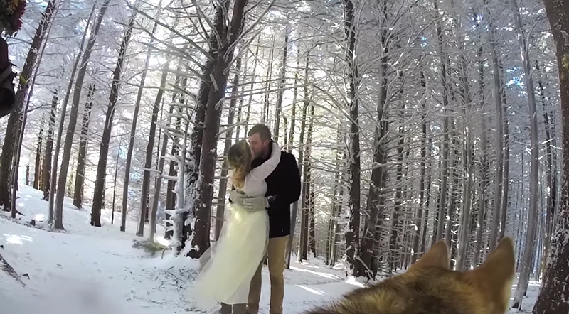 Dog films snowy wedding video with GoPro