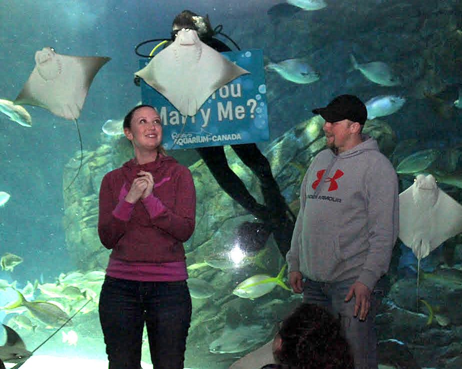 Stingray Photobomb Interrupts Couples Aquarium Proposal