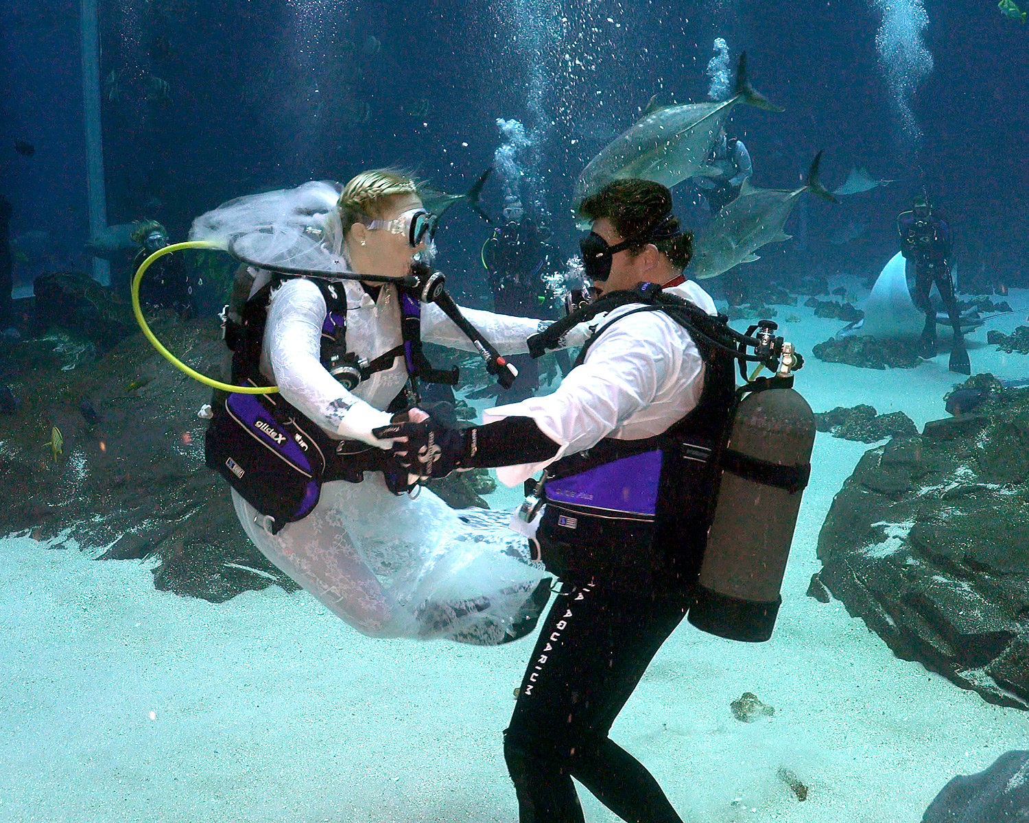 Georgia Aquarium Underwater Wedding