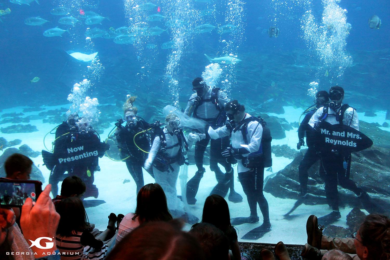 Georgia Aquarium Underwater Wedding