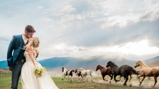 Horses Viral Wedding Photo