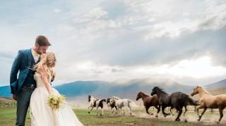 Horses Viral Wedding Photo