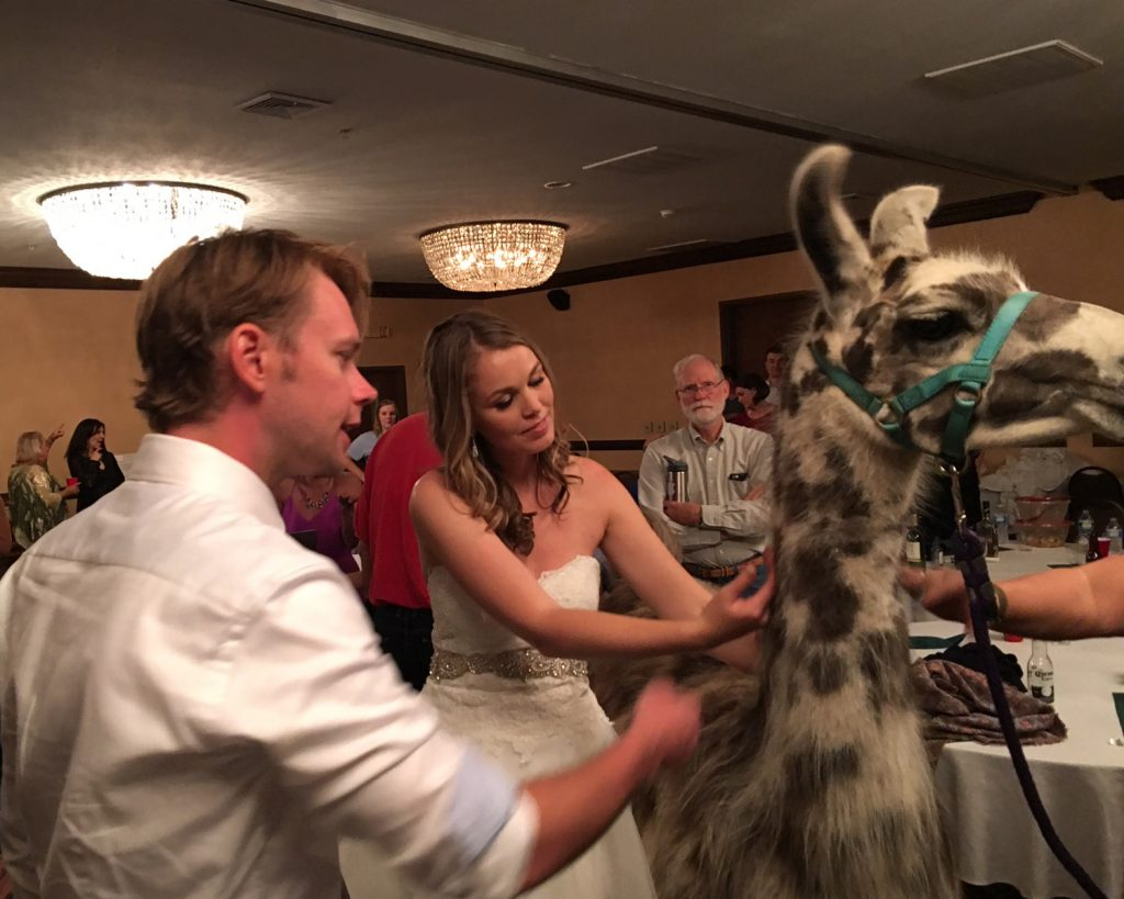Llamas crashed this couple's wedding after-party, and they shared their amazing story — and photos — with The Knot!