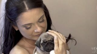 pug bride groom wedding surprise