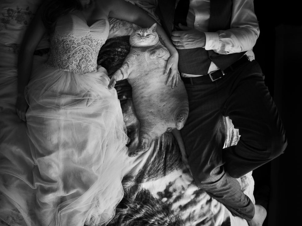Tubby Tabby the 35-pound cat stole the spotlight in this couple's wedding photos. (Credit: Kristi Odom Photography)