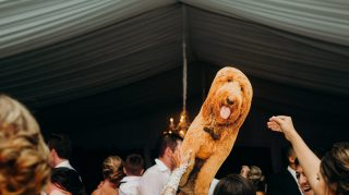 bride cardboard cutout dog wedding