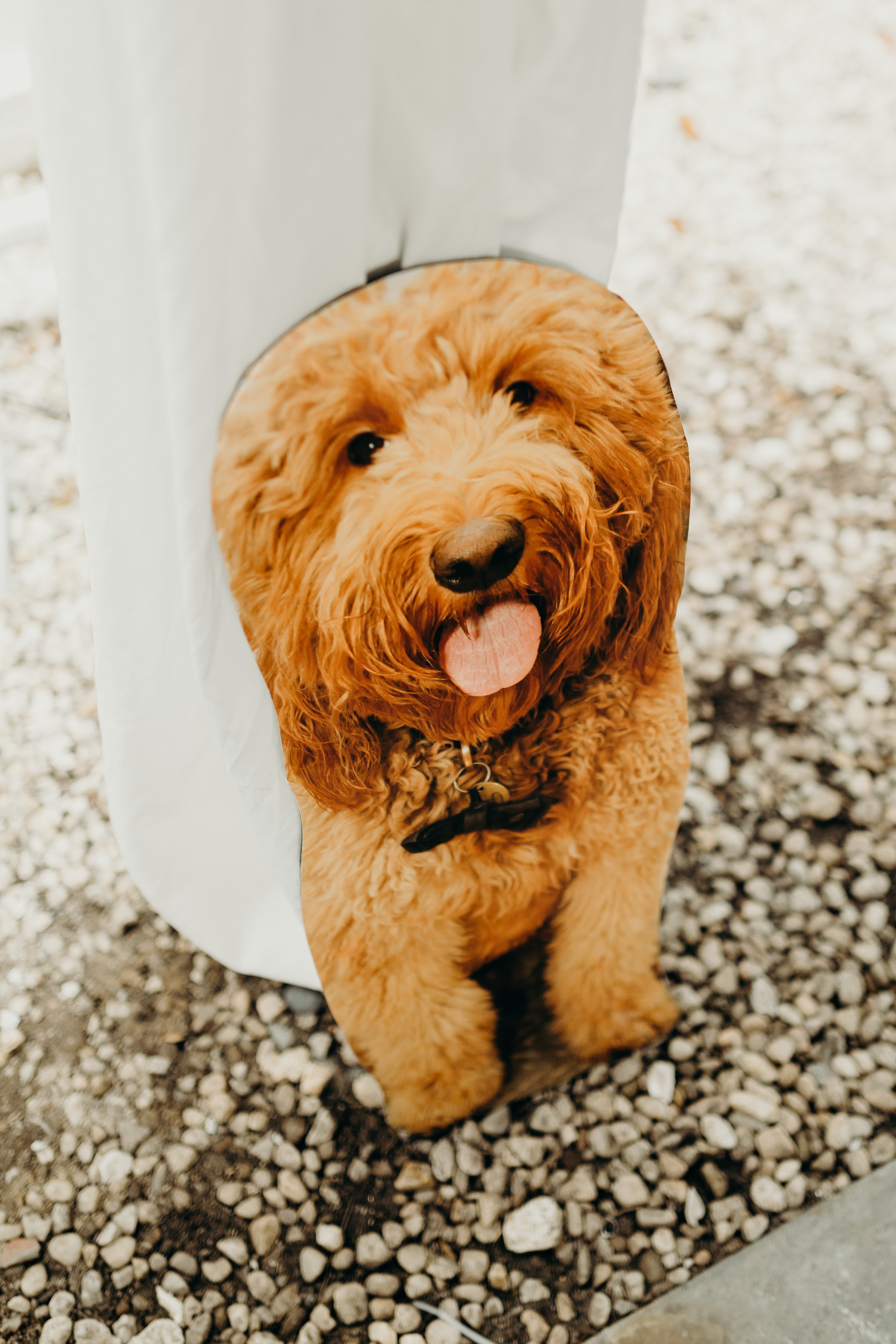 Cardboard cutout of bride's dog surprises the wedding. (Credit: Lydia Ruth Photography)
