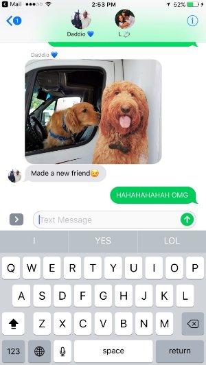 dog makes new friend