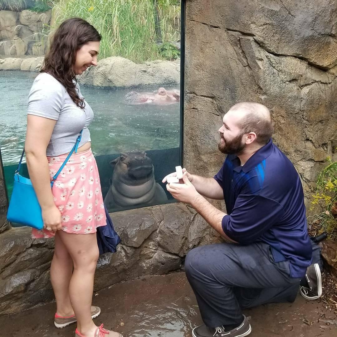 Fiona The Hippo Photobombs Couple S Proposal